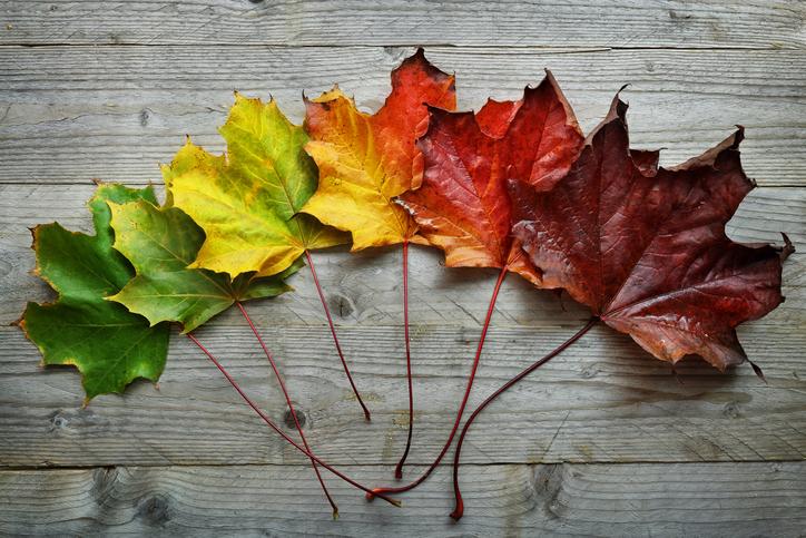 autunno oltrepo